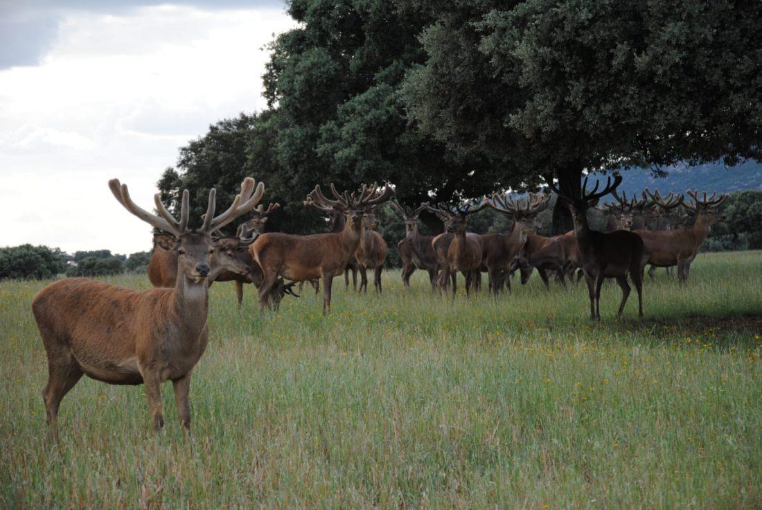 impacto económico caza